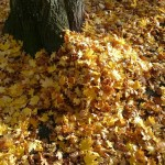 leaf-piles-62808_1920